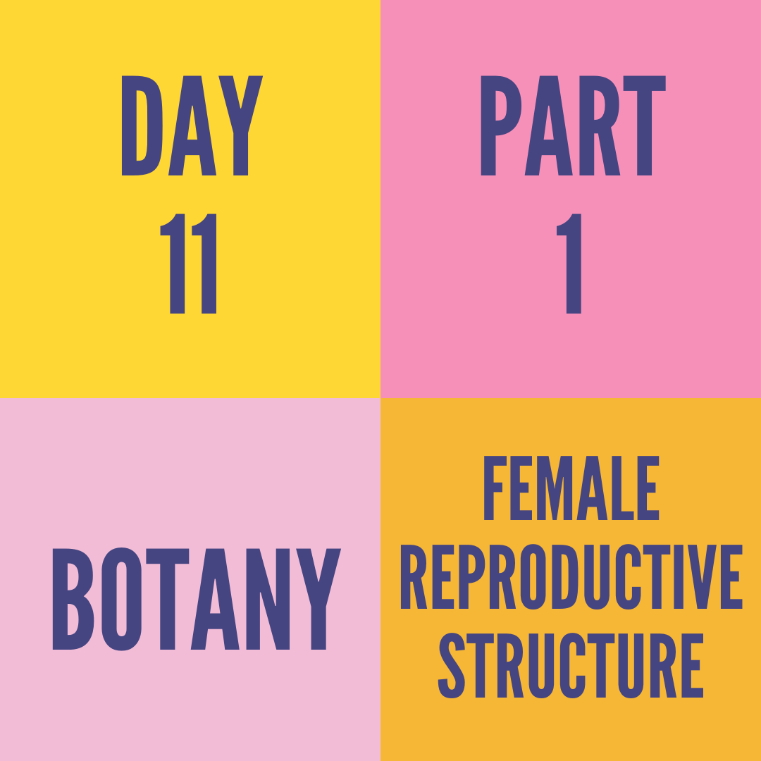 DAY-11 FEMALE REPRODUCTIVE STRUCTURE