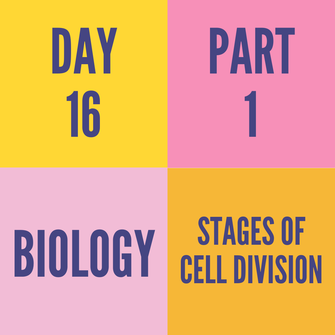 DAY-16 PART-1 STAGES OF CELL DIVISION