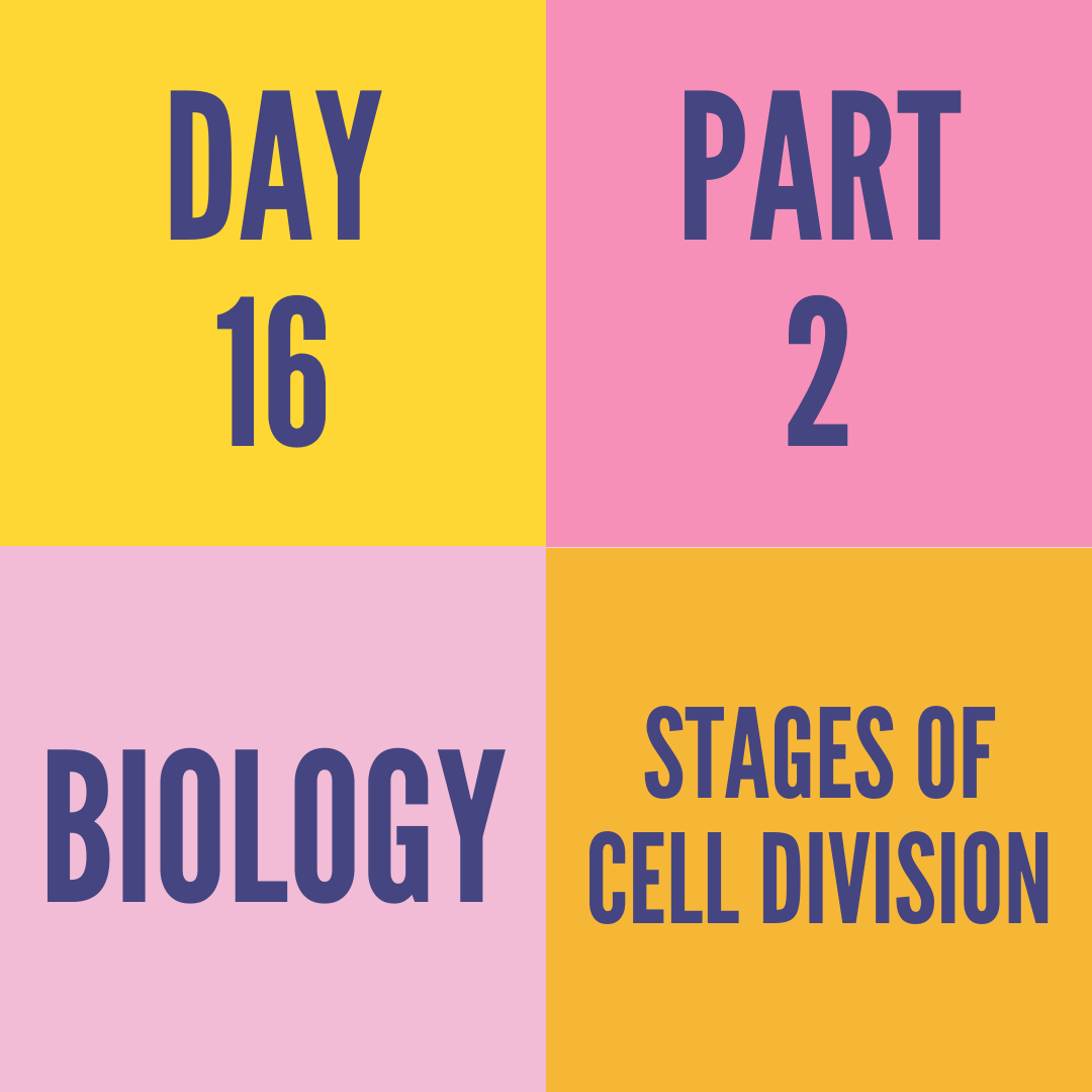 DAY-16 PART-2 STAGES OF CELL DIVISION