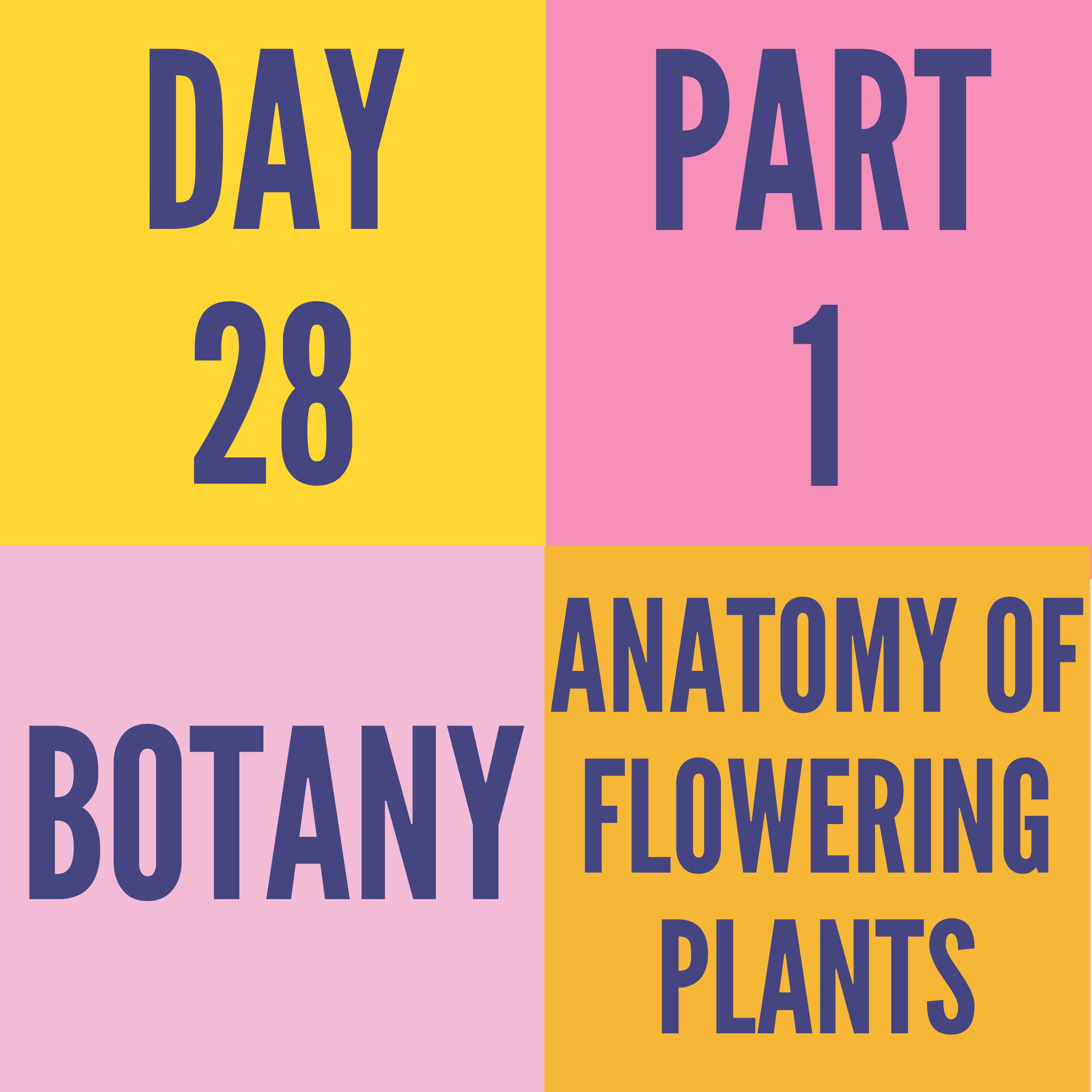 DAY-28 PART-1 ANATOMY OF FLOWERING PLANT