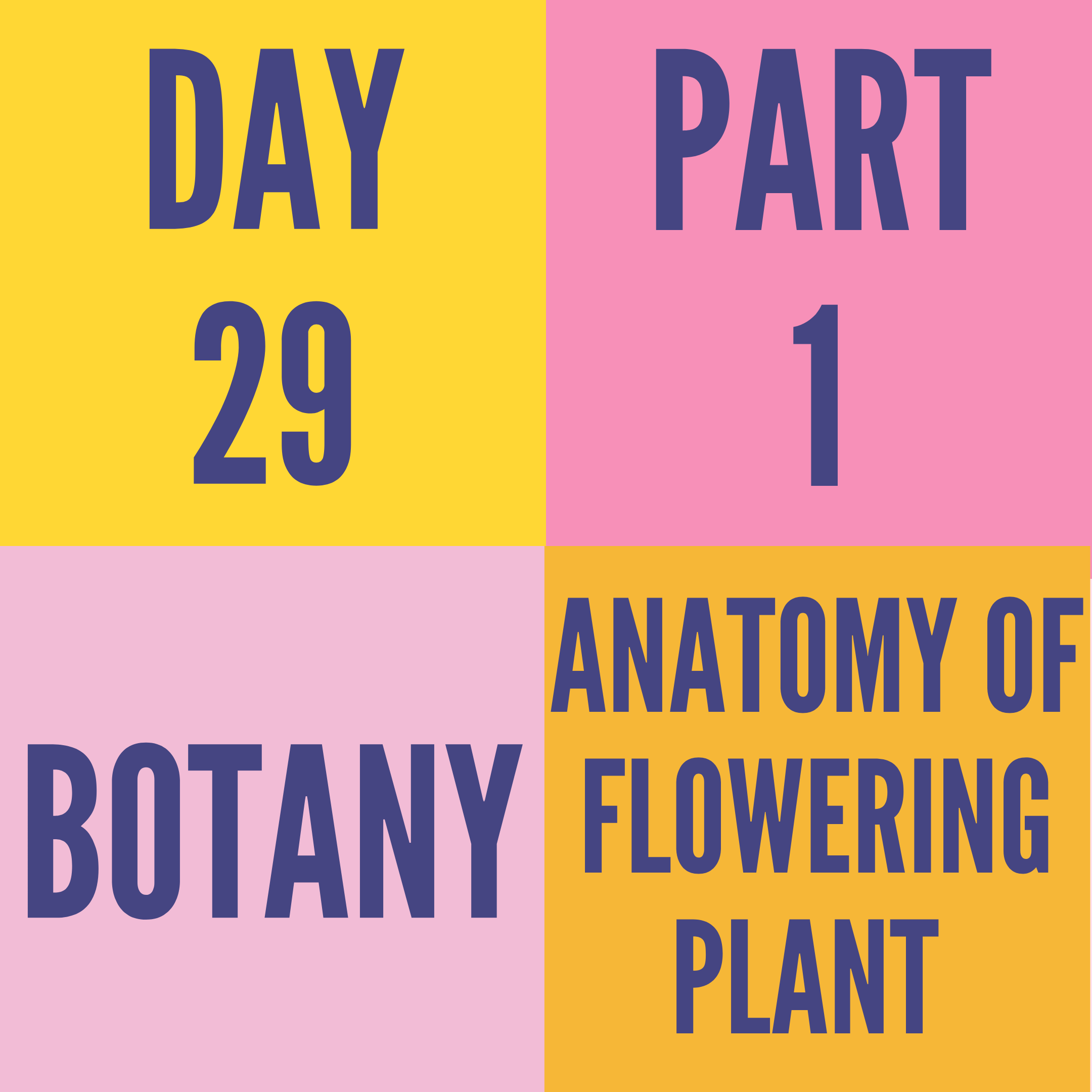 DAY-29 PART-1 ANATOMY OF FLOWERING PLANT